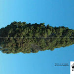WWF Árboles